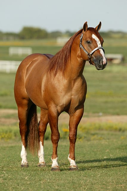 Freckles Sun O Lena a 1999 red dun stallion by AQHA ...