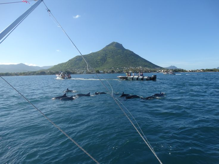 swimming with dolphins, Mauritius