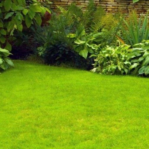 Pielęgnacja trawnika - porady na cały rok