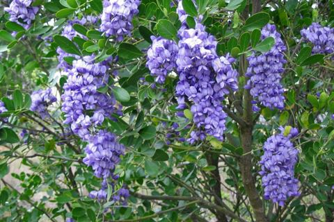 49 Best Shade Plants For Austin Tx Zone 8 Images On
