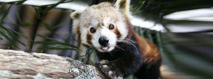 Brooklands Zoo, New Zealand.
