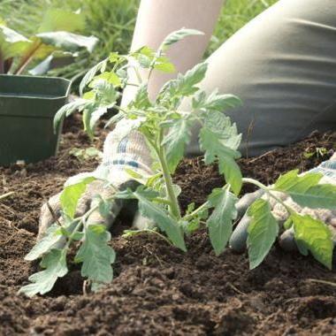 10 Tips For Successful Planting: Organic Gardening