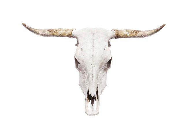 Plakat med horn fra bøffel.
