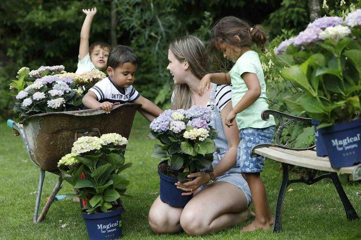 HOUTEN – Marieke de Jong brengt donderdag samen met haar oppaskinderen nog snel wat extra kleur aan met tover-hortensia's in haar siertuin. De zogenoemde Magical-hortensia's veranderen tijdens de bloeiperiode meerdere keren van kleur.    Open Tuinen Weekend  Als afsluiting van de Nationale Tuinweek start vandaag het Open Tuinen Weekend. Meer dan 1.000 leden van tuinvereniging Groei