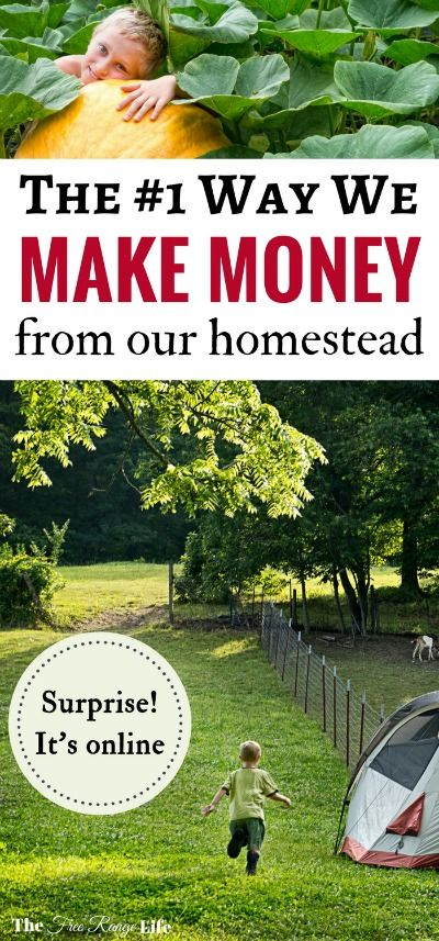 The Surprising Way We Make Money from Our Homestead Online! – VH admin