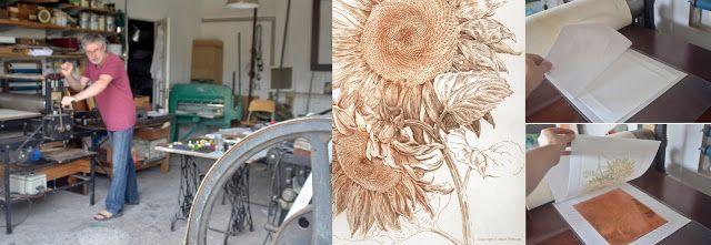 Studio / Sunflower