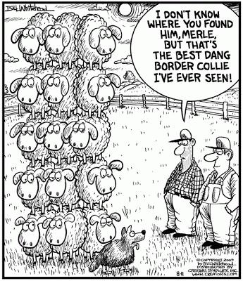 Border Collie joke