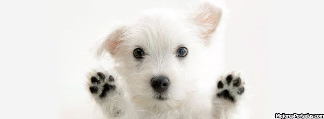 perro+pantalla