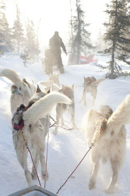 Dog-sled safari in Olos, Finland by Visit Finland, via Flickr - A husky tour is an exquisite way to see the Arctic wilderness. There is something primeval in making your way through snowy landscapes with a pack of dogs. Needless to say, it is also as environmentally friendly as it gets. <--- Can. Not. Wait <3