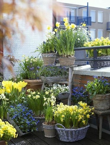 ,Baskets, pails, vases, pots, tins, (fill every container you can, for a deck or balcony) Keeps the weeds out too.