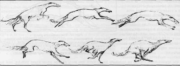 собака бежит рисунок - Поиск в Google