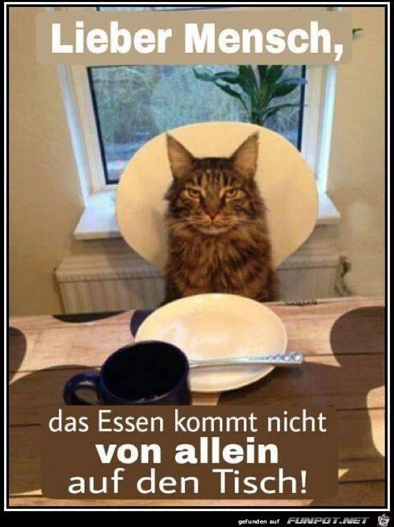 lustiges Bild 'Lieber Mensch.png'- Eine von 60676 Dateien in der Kategorie 'Lustiges' auf FUNPOT.