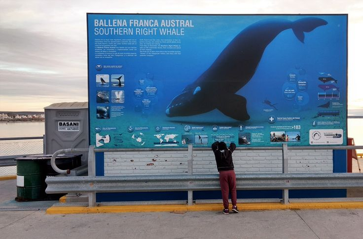 Puerto Madryn - Argentina  2017