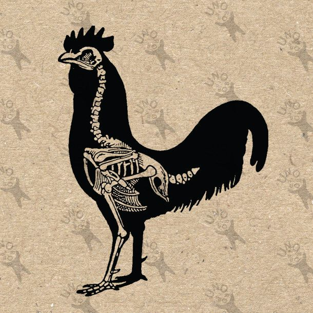 Vintage Black and White image Cockerel Rooster Skeleton Instant Download Digital printable retro drawing picture clipart graphic HQ 300dpi by UnoPrint on Etsy