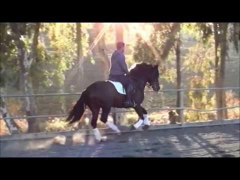 Vídeos de caballos españoles - Yeguada Aimarán