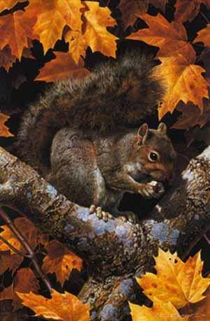 The Carl Brenders - Golden Season - Gray Squirrel painting is now published as a giclée on canvas hand signed by the artist. Canvas size: 18 x 12.I always enjoy watching squirrels, and their acrobatic