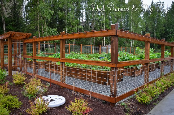 Garden Enclosure with Hog Wire Panel Fence--Dust Bunnies & Dog Toys