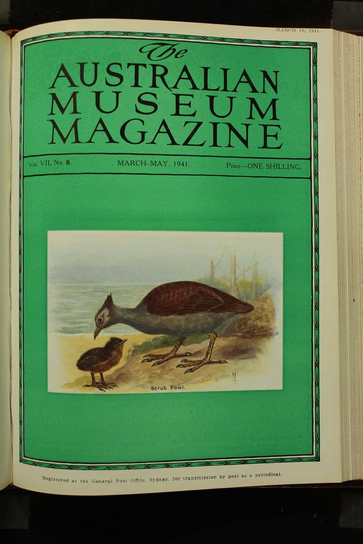 Australian-Museum-Magazine. The Scrub Fowl. Illustrator: Lilian Medland. http://australianmuseum.net.au/Australian-Museum-Magazine-1921-1942/