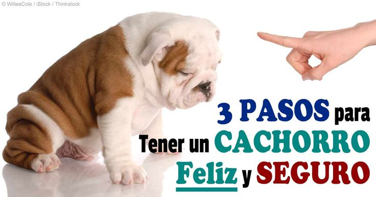 El entrenamiento de cachorro puede ser muy fácil si sabe cómo tratar con las etapas sensibles de desarrollo y si conoce las reglas básicas del entrenamiento de cachorros. http://mascotas.mercola.com/sitios/mascotas/archivo/2014/05/29/entrenamiento-y-socializacion-de-cachorros.aspx