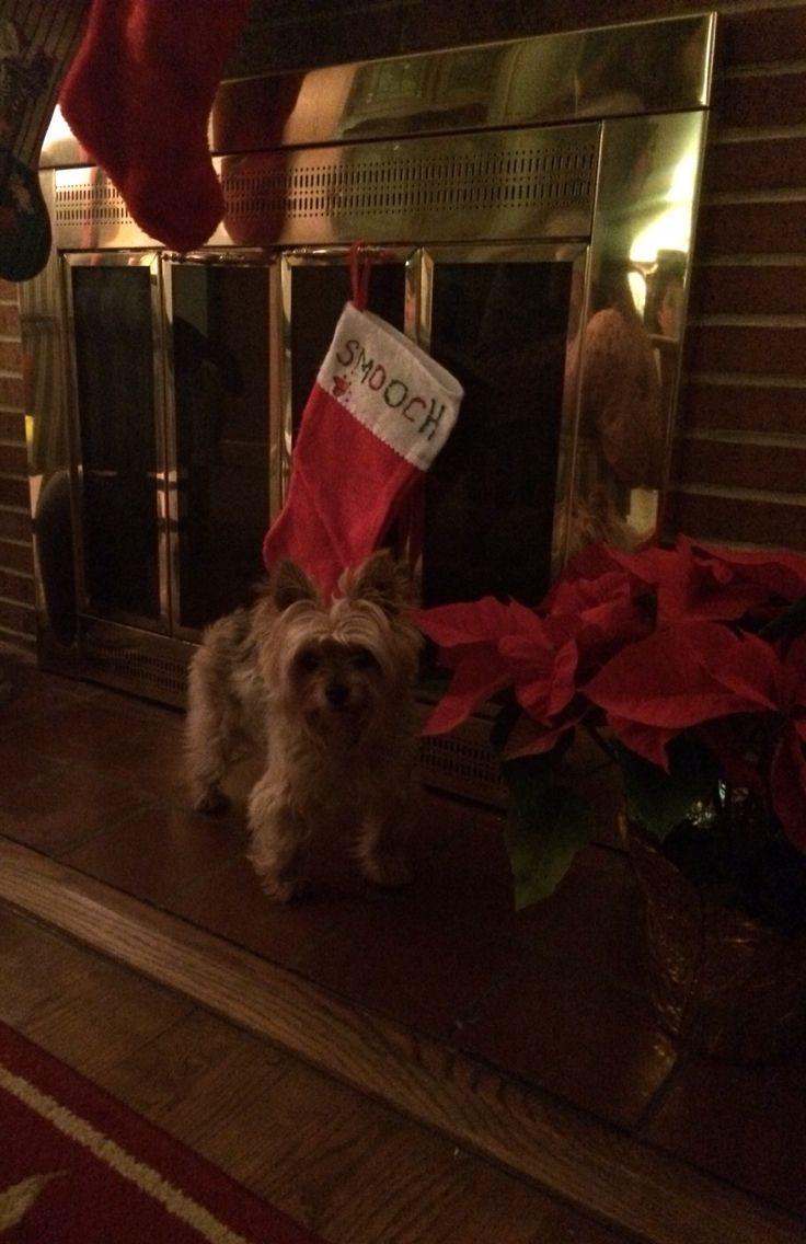 Smooch waiting on Santa!