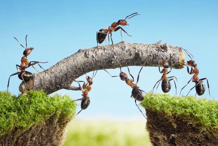 10 bästa tipsen mot myror!