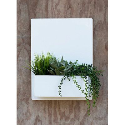 UrbanMettle Madness Rectangular Wall Mounted Planter Color: