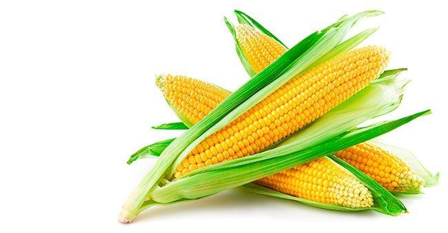 В чем польза консервированной кукурузы и есть ли от нее вред? Сладкая кукуруза была известна еще древним ацтекам, проживающим на мексиканском полуострове Юкатан. В Европе она появилась после открытия Америки и со временем стала одной из важнейших пищевых культур. Так чем обусловлена такая популярность? http://www.spelo-zrelo.ru/poleznoe/svoistva/polza-i-vred-konservirovannoj-kukuruzy/