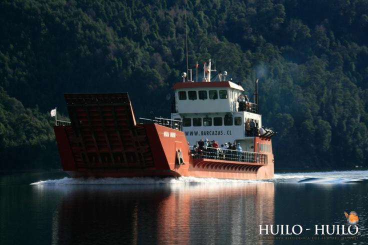 Patagonian Rainforest Crossing. Huilo Huilo