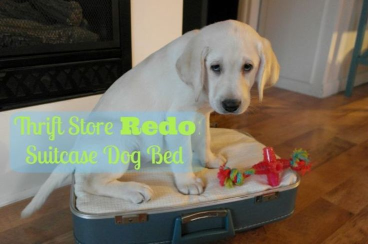 Thrift Store Redo: DIY Suitcase Dog Bed {Thrift Benefit for Shelter Dogs}