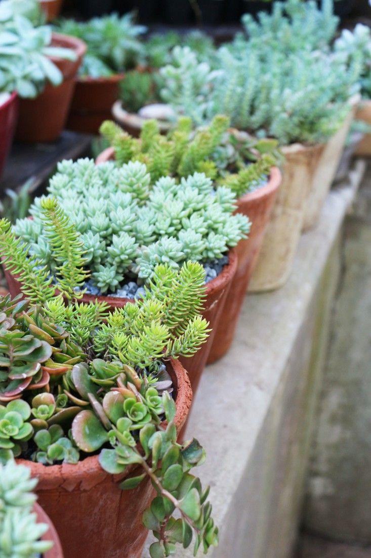 68 best Succulents and cacti images on Pinterest Succulent