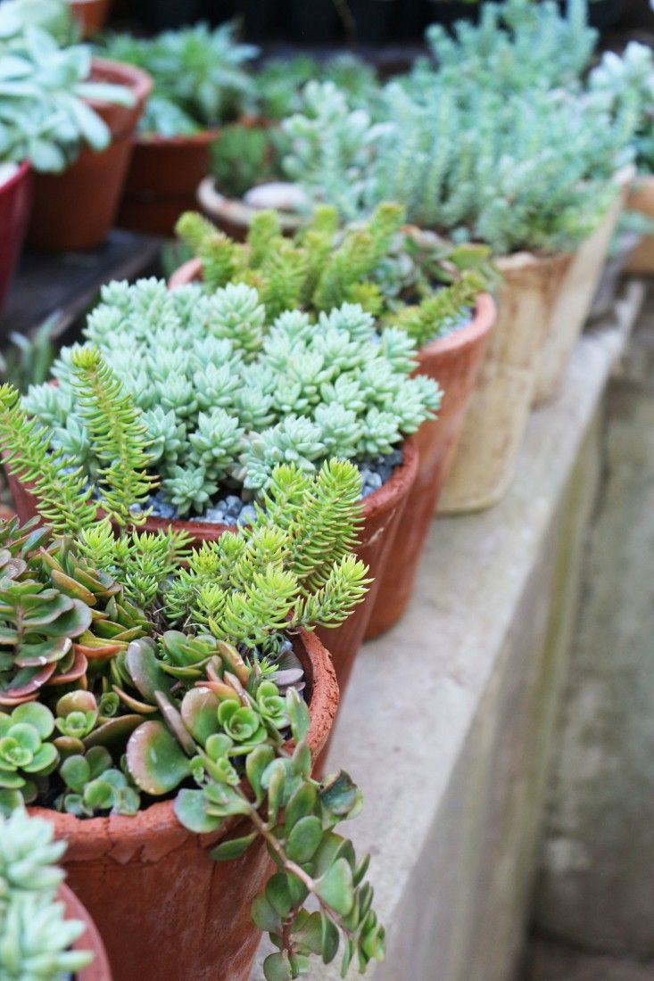 11 Garden Ideas to Steal from South Africa