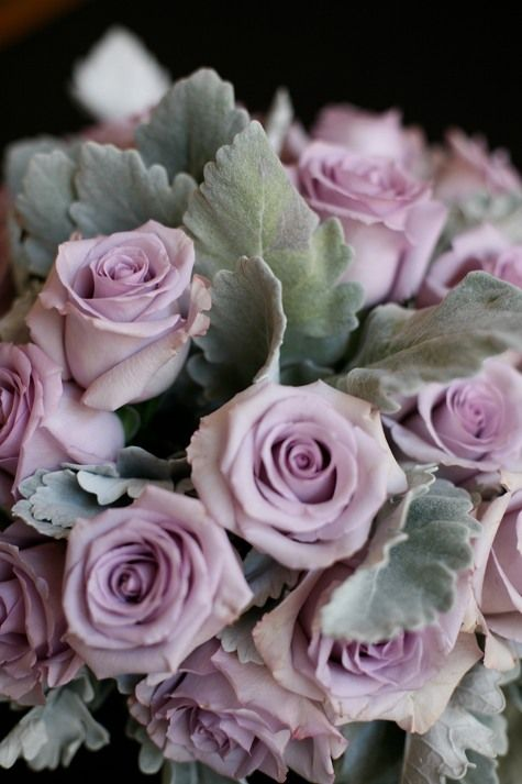 mauve roses and dusty miller (page also shows with blue thistle and blood red roses)