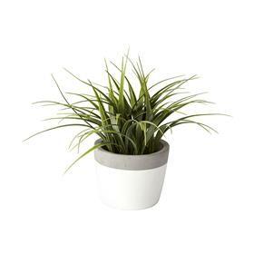 Succulents in Cement Pot (bathroom) $7