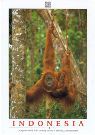 The 2.5 million hectare Tropical Rainforest Heritage of Sumatra site comprises three national parks: Gunung Leuser National Park, Kerinci Seblat National Park and Bukit Barisan Selatan National Park. The site holds the greatest potential for long-term conservation of the distinctive and diverse biota of Sumatra, including many endangered species.