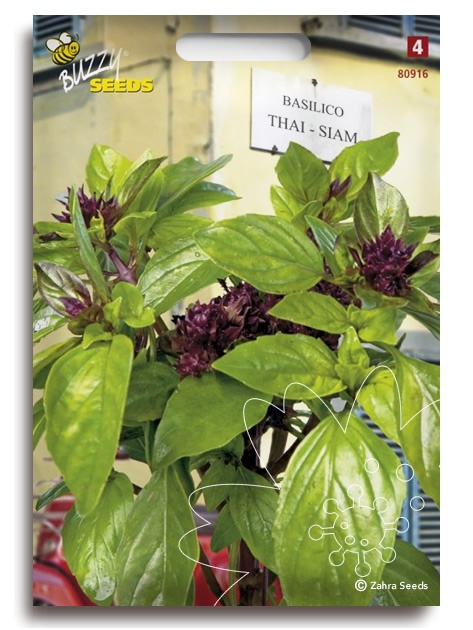 Zahra Seeds    Heilige basilicum, Thaise heilige basilicum, holy basil, Ocimum tenuiflorum (L), nhu tía (Vietnam), daun ruku-ruku (Indonesië), tulsi / tulasī (India), Kami-mebōki (Japan), bai krapao / bai gka-prow / kraphao / กะเพรา (Thailand)