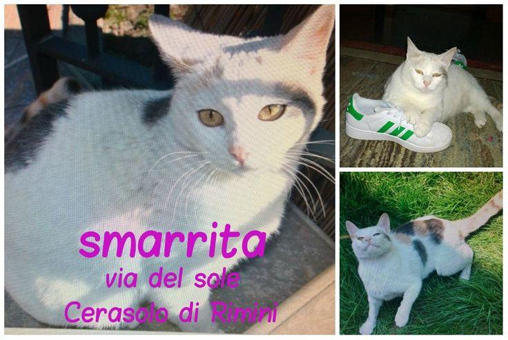 Continua la ricerca di questa gatta smarita il 18 giugno 2015 a CERASOLO di RIMINI in Via Del Sole. Gatta femmina sterilizzata e con microchip di 5 anni. La gatta può essersi infilata su qualche mezzo perché ha questa abitudine. Si offre ricompensa.  Contattare Rita al 339-7241566.