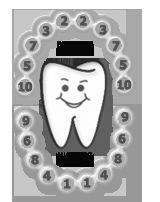 Порядок  и сроки прорезывания молочных зубов.