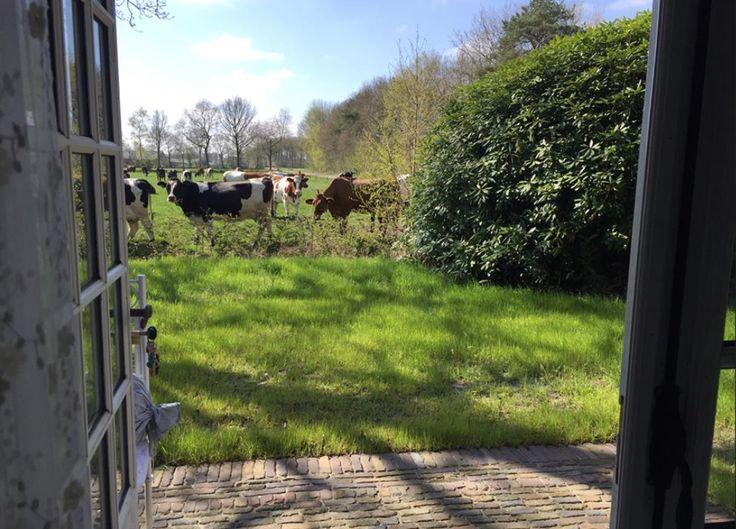 Jeanne d'Arc Living- boerderij.