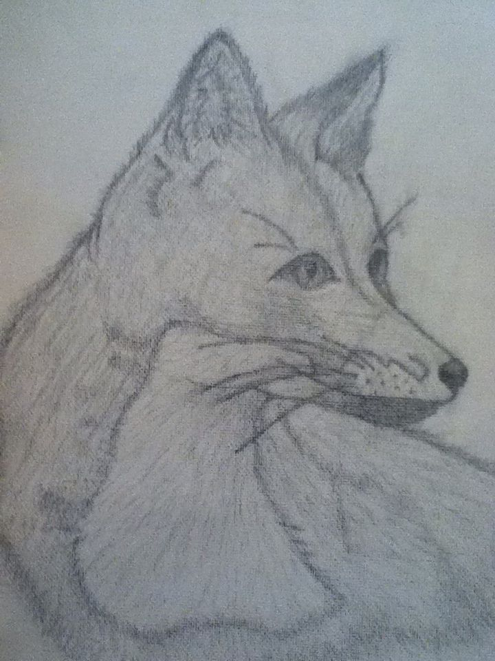 A drawing of a fox I did a while back.