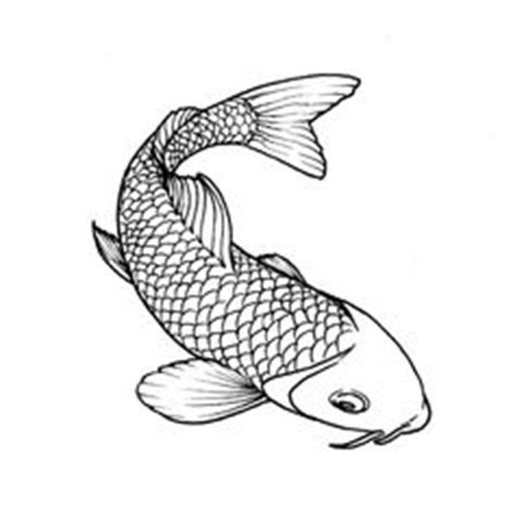 how to draw a coy fish