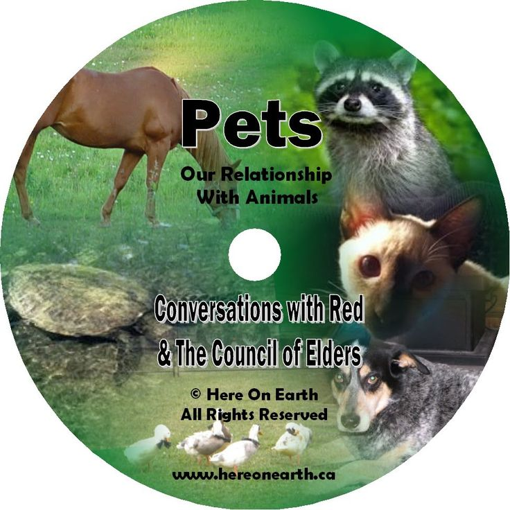 Here On Earth. Pets, Animal Relationships