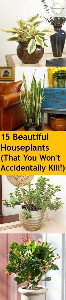 15 Beautiful House plants (That You Won't Accidentally Kill!)