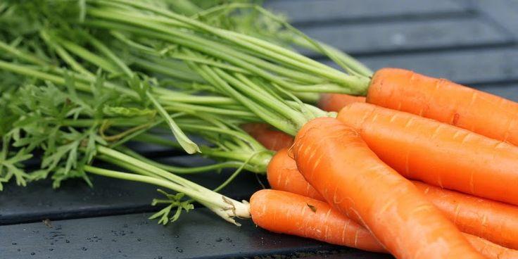 HOLD GULERODSFLUERNE I AVE - Carrots