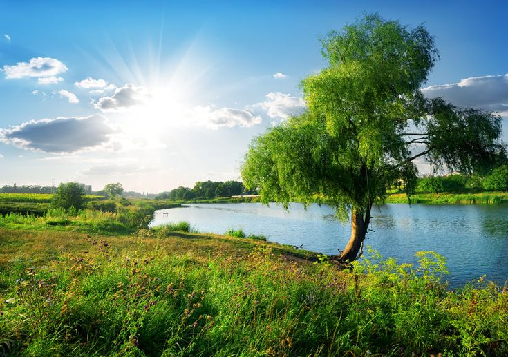 """Por Esteban Correa """"Después me mostró un río limpio de agua de vida, resplandeciente como…"""