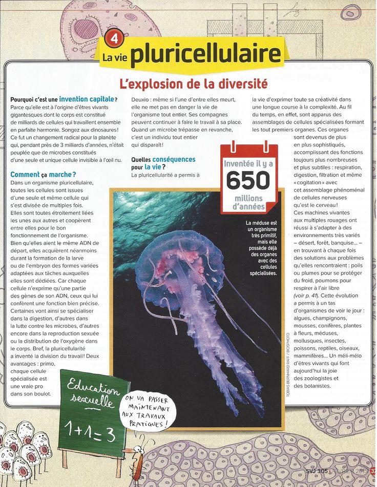 Inventions de la vie 4 - La vie pluricellulaire