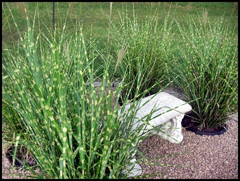 17 best images about buying a house on pinterest keep for Landscaping with zebra grass