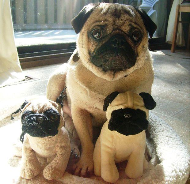 Pets With Stuffed Animals - Cute Animal Photos - Good Housekeeping