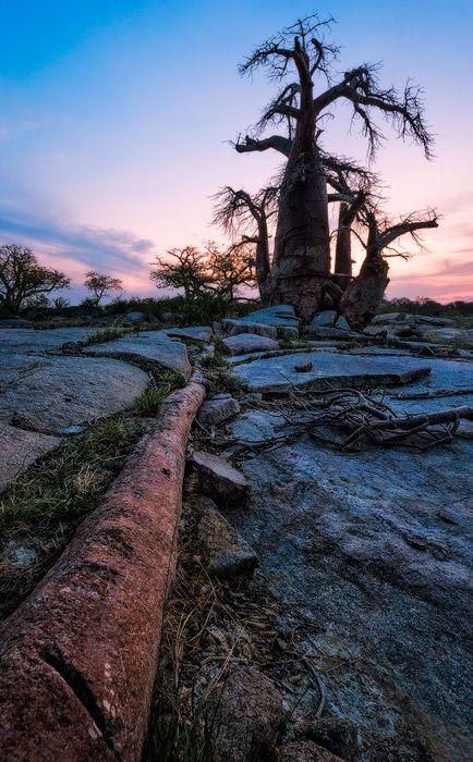 Kubu Twilight Kubu Island, Makgadikgadi Pans, Botswana