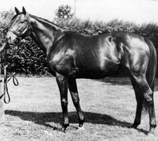 Nashua (1952-1982) was sired by Nasrullah out of Segula; Grandsire: Nearco; Damsire: Johnstown. Nashua had 22 wins out of 30 starts and was named the 1954 U.S. Champion 2-Year-Old Colt. He was also the U.S. Champion 3-Year- Old and Horse of the Year in 1955. Also in 1965 he won a match race with Swaps and won. Nashua was inducted into the Hall of Fame in 1965.