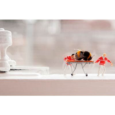 A and Bee by Mr Kuu